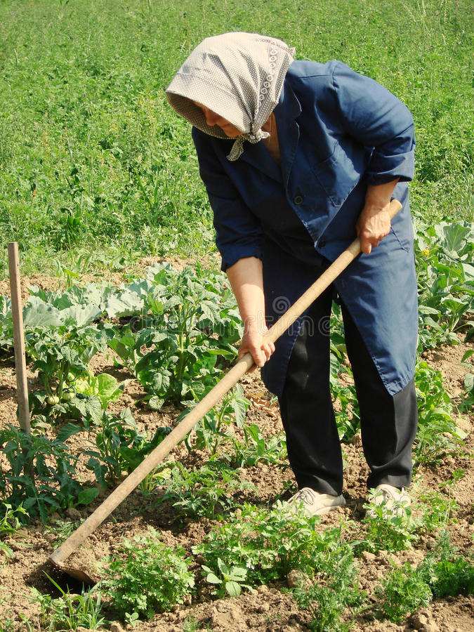 γεωργική εργασία στοκ φωτογραφίες με δικαίωμα ελεύθερης χρήσης