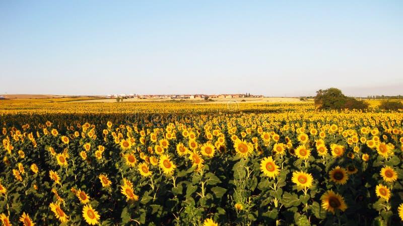 Γεωργικοί τομείς το φθινόπωρο στοκ φωτογραφία με δικαίωμα ελεύθερης χρήσης