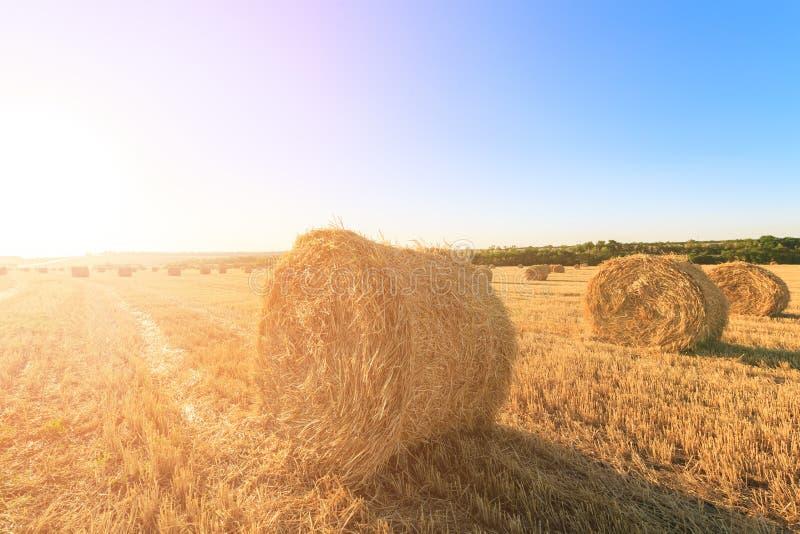 Γεωργικός τομέας μετά από να συγκομίσει το σίτο Οι ρόλοι του σανού είναι στο αντίθετο φως στοκ φωτογραφίες με δικαίωμα ελεύθερης χρήσης