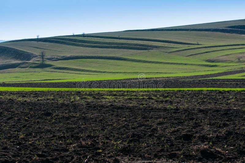 Γεωργικό τοπίο τομέων στο πρώιμο ελατήριο, στοκ φωτογραφία