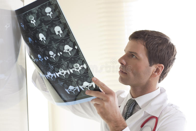 γιατρός γατών που εξετάζ&epsilon στοκ φωτογραφία με δικαίωμα ελεύθερης χρήσης