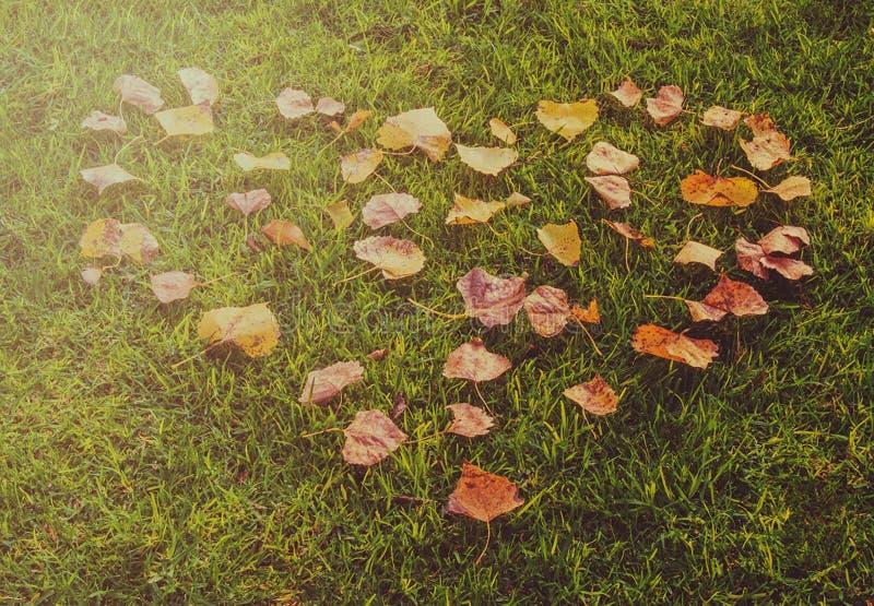 Για την αγάπη του φθινοπώρου στοκ φωτογραφία