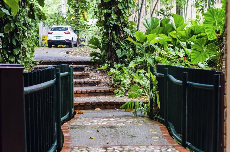 Για τους πεζούς γέφυρα με τα σκαλοπάτια, που περιβάλλονται από τη βλάστηση και την τροπική φρεσκάδα στοκ εικόνα με δικαίωμα ελεύθερης χρήσης