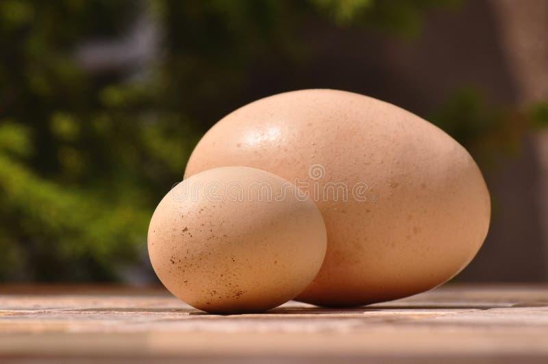 Γιγαντιαία και μικρά αυγά στοκ εικόνα με δικαίωμα ελεύθερης χρήσης