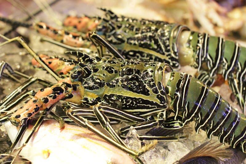 Γιγαντιαίος ακατέργαστος φρέσκος αστακός, μεγάλες άγριες γαρίδες που πιάνονται, θαυμάσιο εστιατόριο θαλασσινών στη φρέσκια αγορά στοκ φωτογραφίες με δικαίωμα ελεύθερης χρήσης