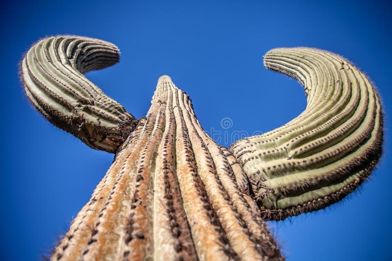 Γιγαντιαίος κάκτος Saguaro - οριζόντια κινηματογράφηση σε πρώτο πλάνο στοκ εικόνα με δικαίωμα ελεύθερης χρήσης