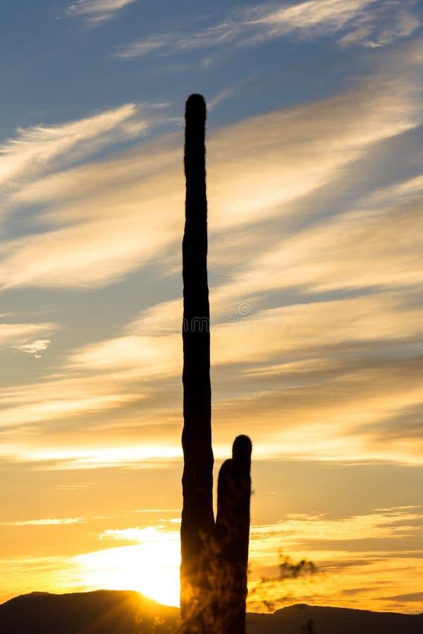 Γιγαντιαίος κάκτος Saguaro στην Αριζόνα που σκιαγραφείται ενάντια σε έναν ζωηρόχρωμο ουρανό στοκ εικόνες με δικαίωμα ελεύθερης χρήσης