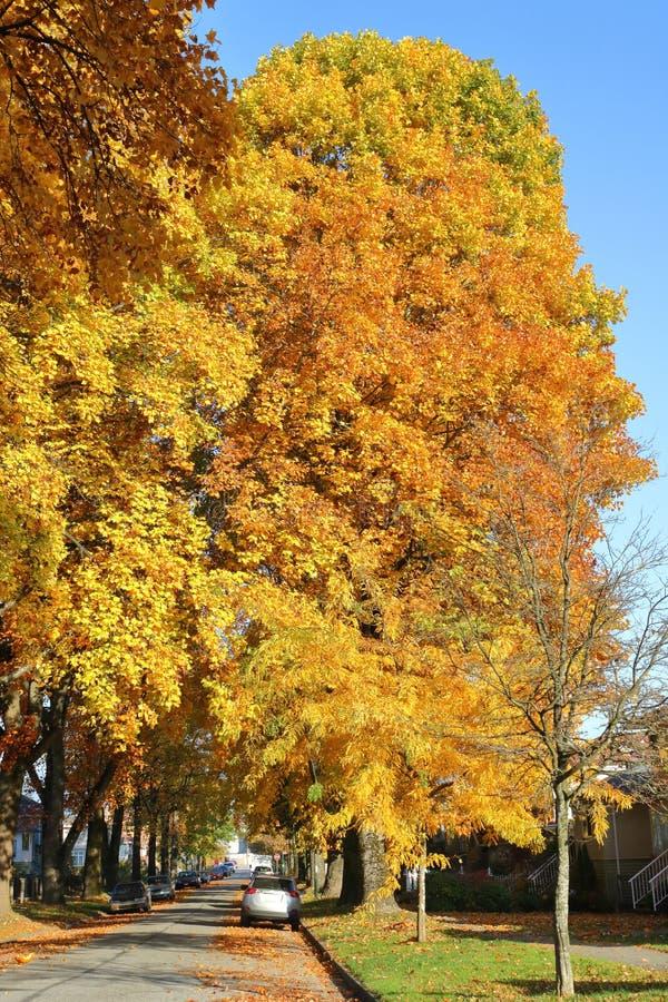 Γιγαντιαίο καναδικό φύλλο σφενδάμου φθινοπώρου στοκ φωτογραφίες