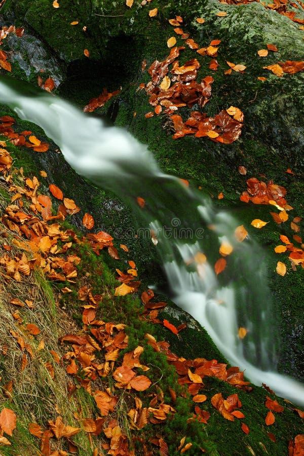 γιγαντιαίο ρεύμα βουνών φθινοπώρου στοκ φωτογραφία