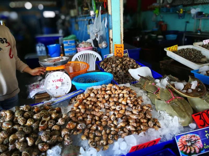 Γιγαντιαίο σαλιγκάρι από τα φρέσκα θαλασσινά μεγάλων θαλασσίων βαθών στην αγορά θαλασσινών της Ταϊλάνδης στοκ εικόνες