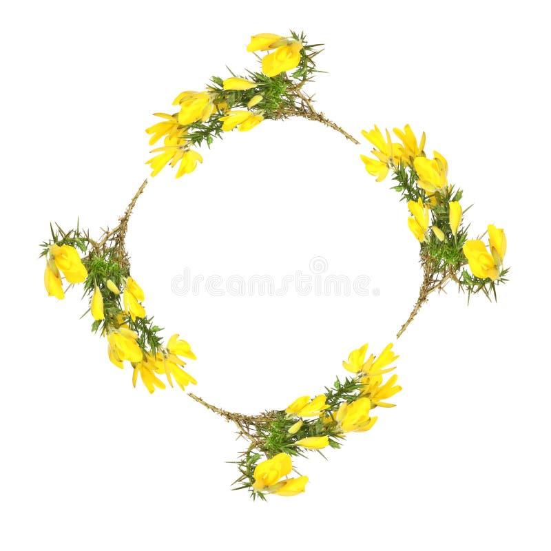 γιρλάντα λουλουδιών gorse στοκ φωτογραφίες