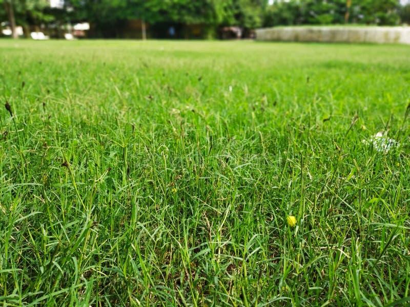 Γιόγκα cout στο πάρκο στοκ εικόνες