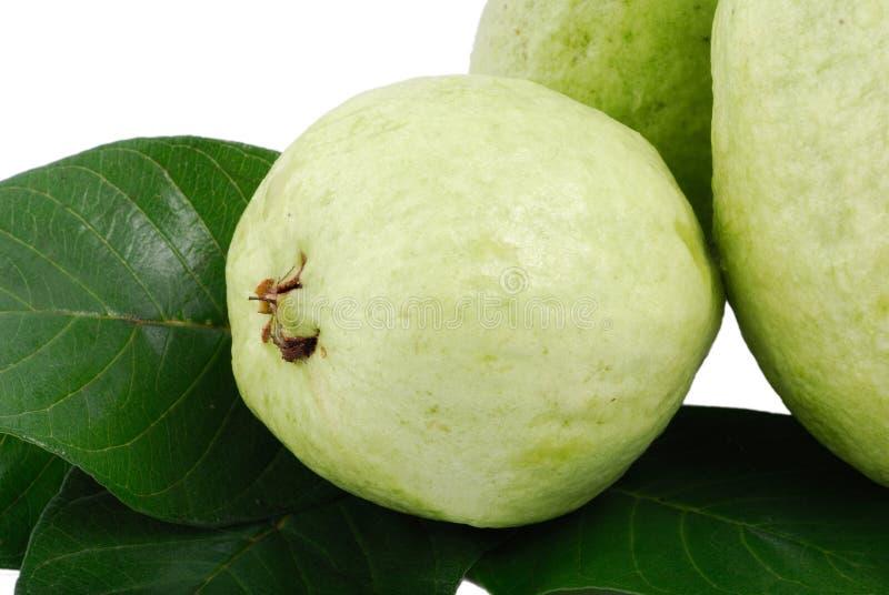 Download γκοϋάβα στοκ εικόνες. εικόνα από συγκομιδή, γκοϋάβα, αγρόκτημα - 13180854