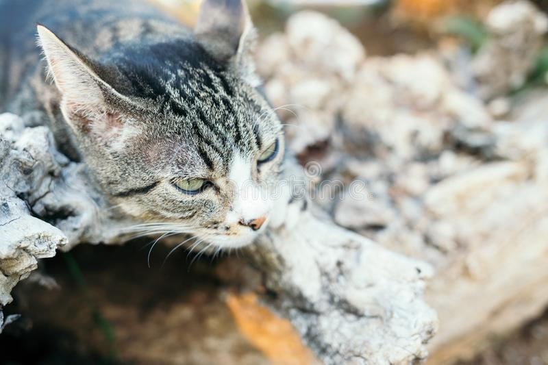 Γκρίζα γάτα οδών στοκ εικόνα με δικαίωμα ελεύθερης χρήσης