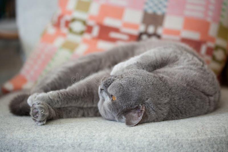 Γκρίζα γάτα που βρίσκεται σε μια καρέκλα στοκ φωτογραφία