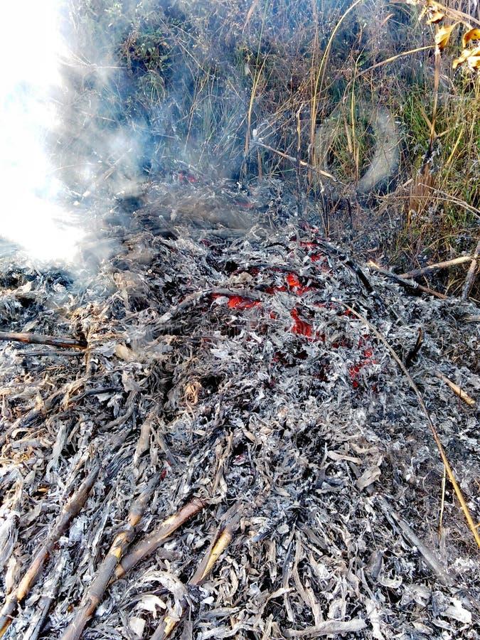 Γκρίζα μικρή πυρκαγιά στοκ φωτογραφία