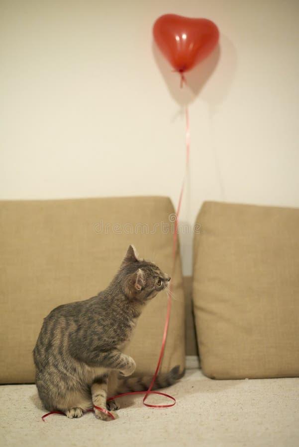 Γκρίζα τιγρέ παιχνίδια γατακιών με την κόκκινη σειρά με την καρδιά που διαμορφώνεται baloon αμμώδη σε κίτρινο με τον καφετή καναπ στοκ εικόνες με δικαίωμα ελεύθερης χρήσης