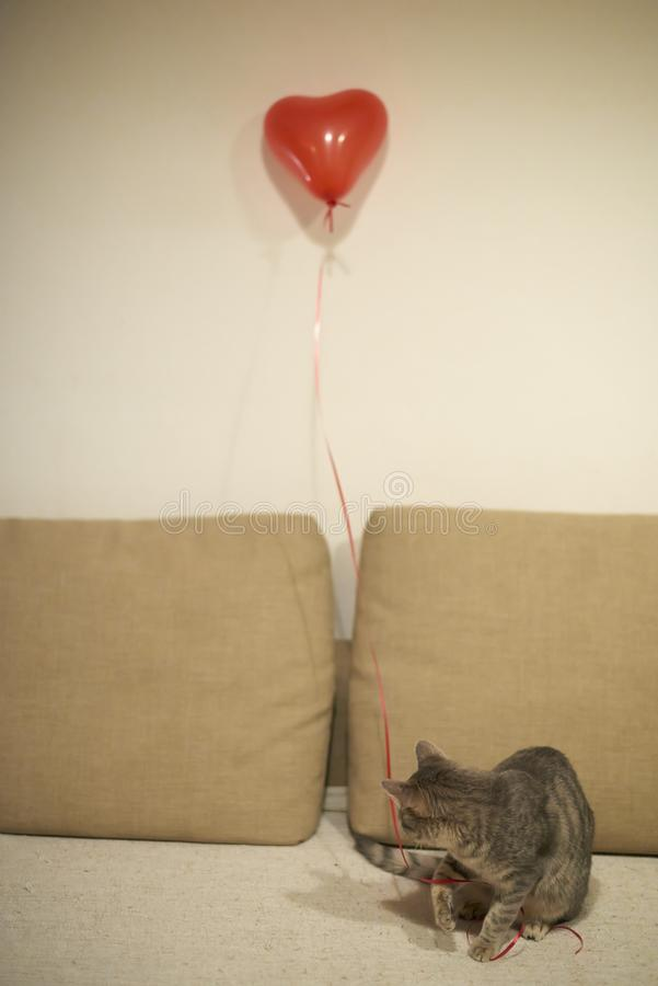Γκρίζα τιγρέ παιχνίδια γατακιών με την κόκκινη σειρά με την καρδιά που διαμορφώνεται baloon αμμώδη σε κίτρινο με τον καφετή καναπ στοκ εικόνες