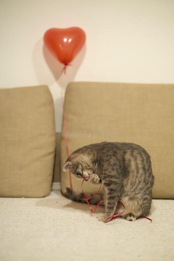 Γκρίζα τιγρέ παιχνίδια γατακιών με την κόκκινη σειρά με την καρδιά που διαμορφώνεται baloon αμμώδη σε κίτρινο με τον καφετή καναπ στοκ φωτογραφίες
