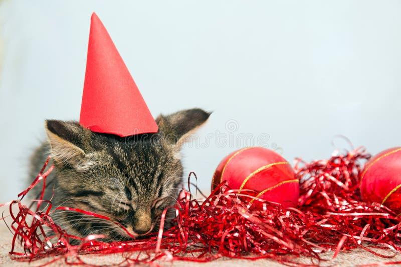 Γκρίζος μικρός ύπνος γατακιών Χριστουγέννων στοκ εικόνες