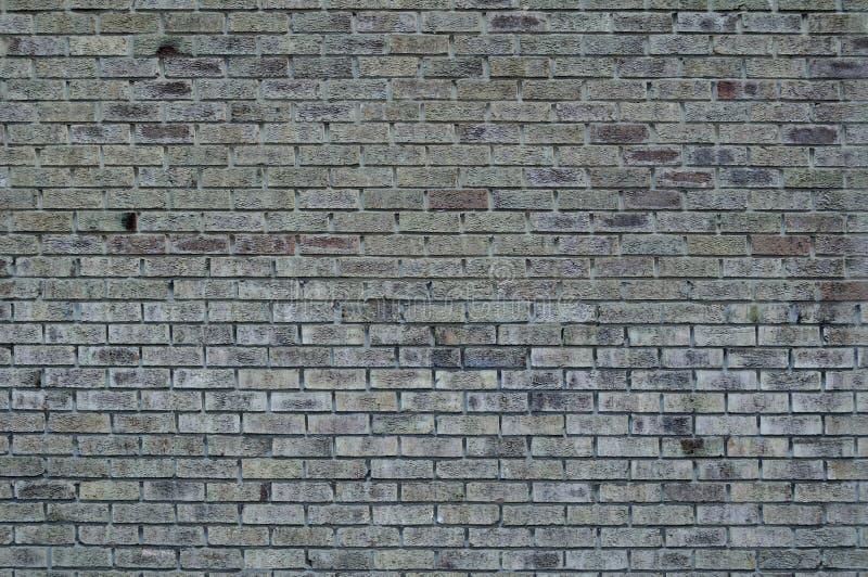 γκρίζος τοίχος τούβλων στοκ εικόνα