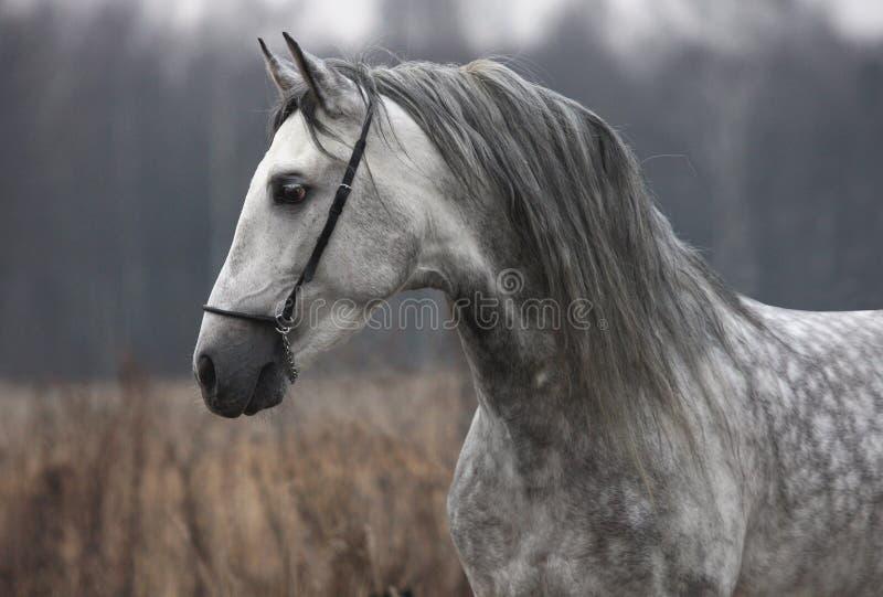 γκρίζο άλογο φθινοπώρου στοκ φωτογραφία