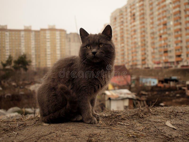 Γκρίζο γάτα και τραγούδι και σύγχρονο residental υπόβαθρο πόλεων στοκ εικόνες