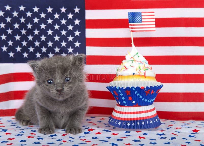 Γκρίζο γατάκι με το πατριωτικό κέικ φλυτζανιών στοκ φωτογραφία με δικαίωμα ελεύθερης χρήσης