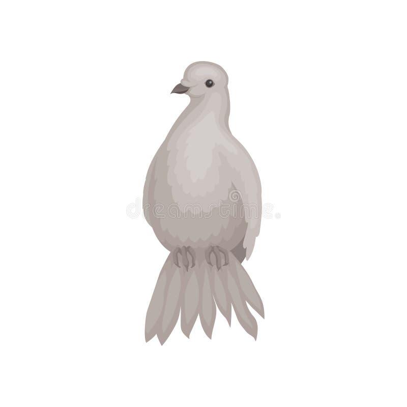 Γκρίζο περιστέρι με τη χνουδωτή ουρά Πουλί με τα μικρά επικεφαλής και κοντά πόδια Άγριο επενδυμένο με φτερά ζώο Επίπεδο διανυσματ διανυσματική απεικόνιση