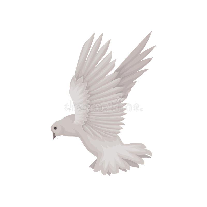 Γκρίζο περιστέρι στη δράση πετάγματος Πουλί με τα ευρέα ανοικτά φτερά Θέμα πανίδας Επίπεδο διάνυσμα για την πρόσκληση ή τη ευχετή απεικόνιση αποθεμάτων