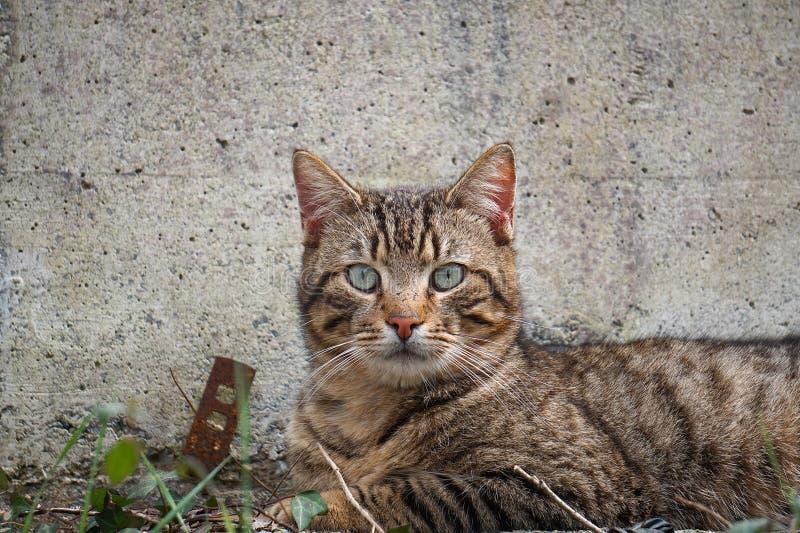 Γκρίζο πορτρέτο γατών στην οδό στοκ φωτογραφία με δικαίωμα ελεύθερης χρήσης