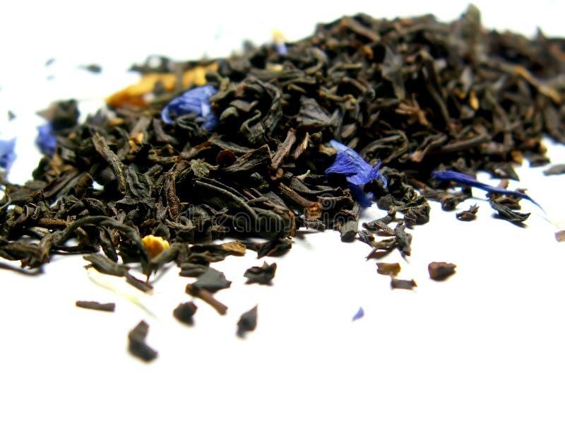 γκρίζο τσάι κόμη Στοκ φωτογραφία με δικαίωμα ελεύθερης χρήσης