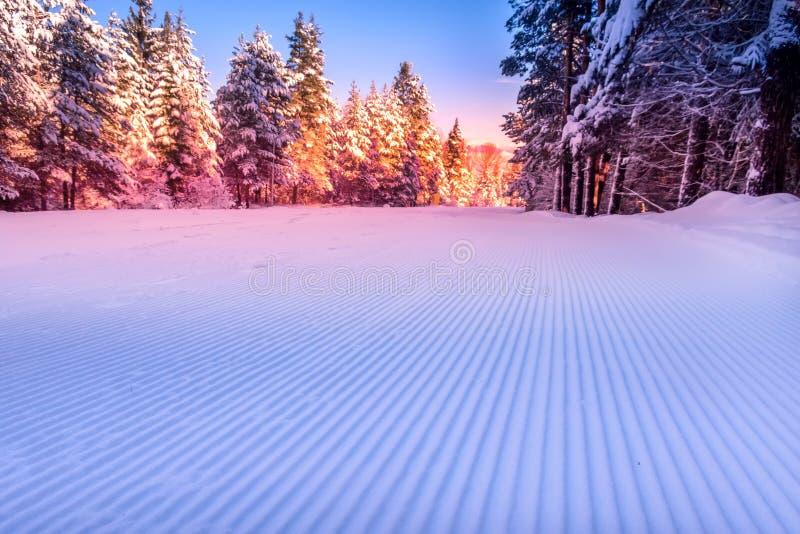 Γκριζαρισμένο χιόνι και δασική κλίση σκι την αυγή στοκ φωτογραφίες με δικαίωμα ελεύθερης χρήσης