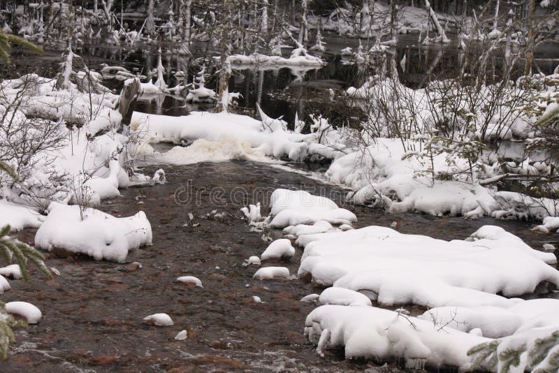 Γκρι, χειμώνας, σκηνή, ενός έλους στοκ εικόνα