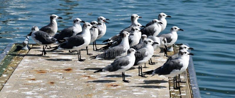 Γλάροι στο λιμάνι της μαρίνας στοκ εικόνες με δικαίωμα ελεύθερης χρήσης