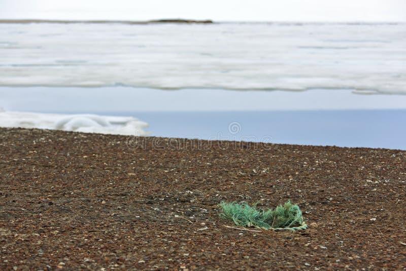 Γλάρος με τα πλαστικά σκουπίδια στο νησί της Αρκτικής στοκ εικόνα