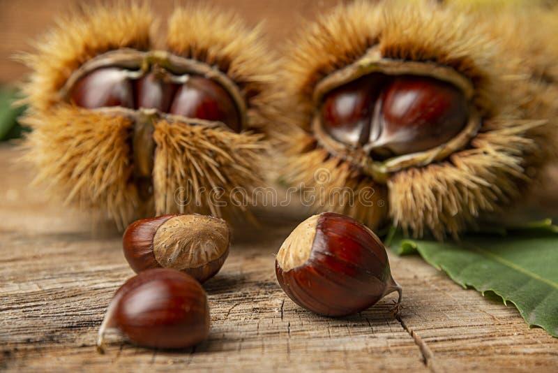 Γλυκά κάστανα - Castanea sativa στοκ εικόνες