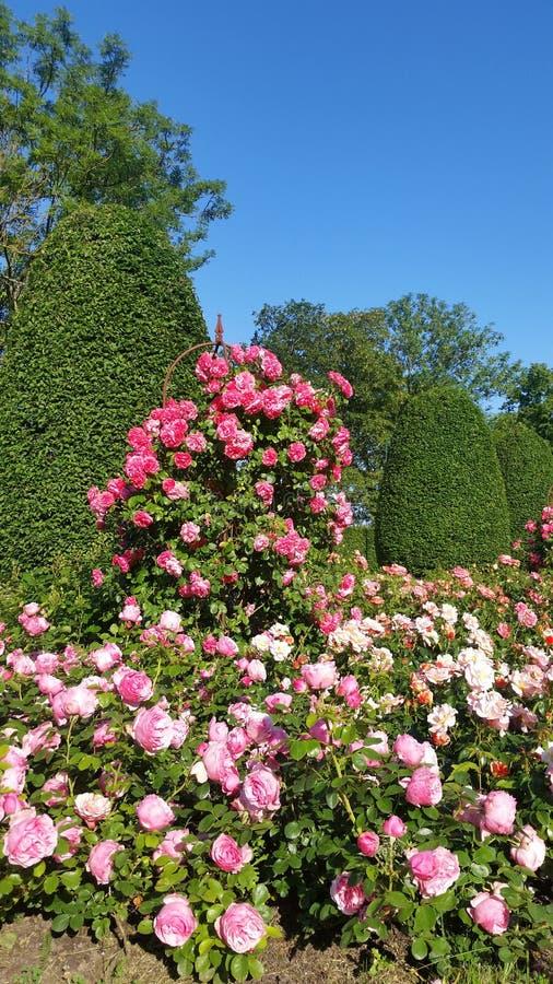 Γλυκά πολύχρωμα τριαντάφυλλα στοκ εικόνες