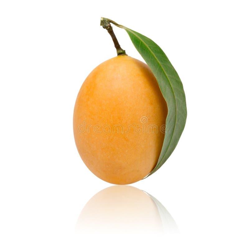 γλυκά της Παρθένου Μαρίας ταϊλανδικά φρούτα δαμάσκηνων που απομονώνονται στο άσπρο υπόβαθρο στοκ εικόνα