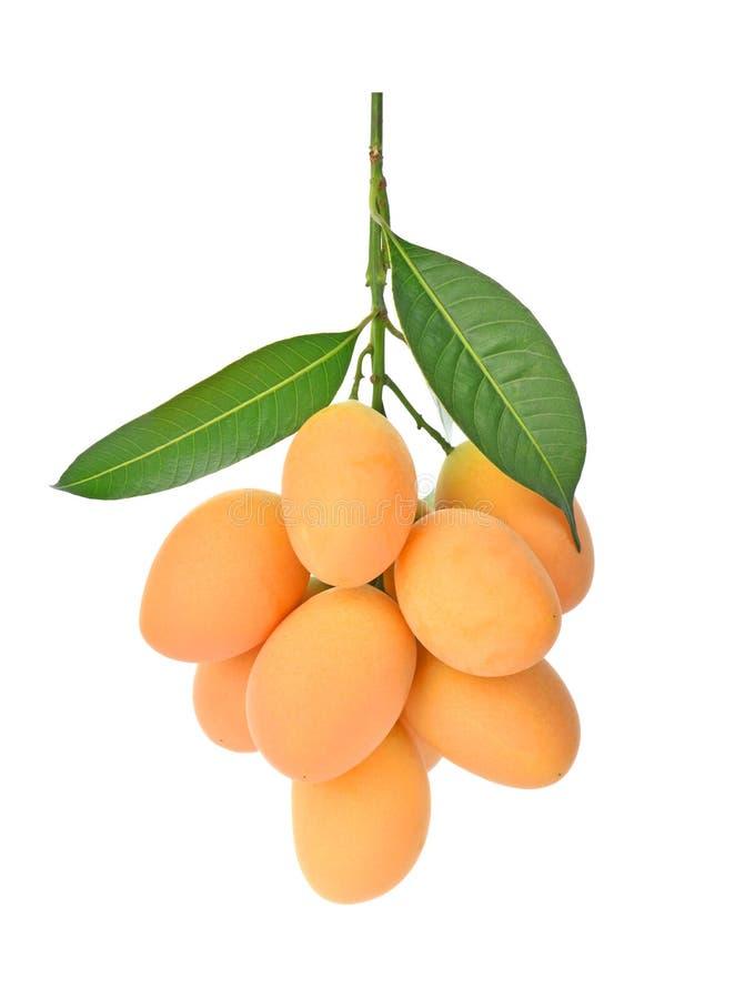 Γλυκά της Παρθένου Μαρίας ταϊλανδικά φρούτα δαμάσκηνων mayongchid στο άσπρο υπόβαθρο στοκ φωτογραφίες