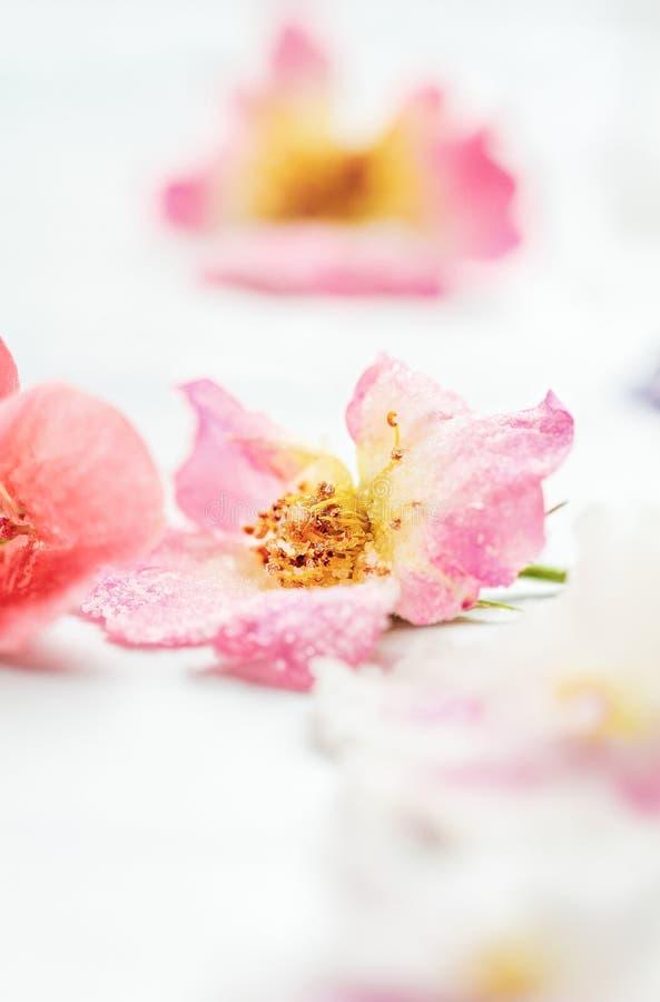 Γλυκαμένος ή κρυσταλλωμένος αυξήθηκε λουλούδια στοκ εικόνες
