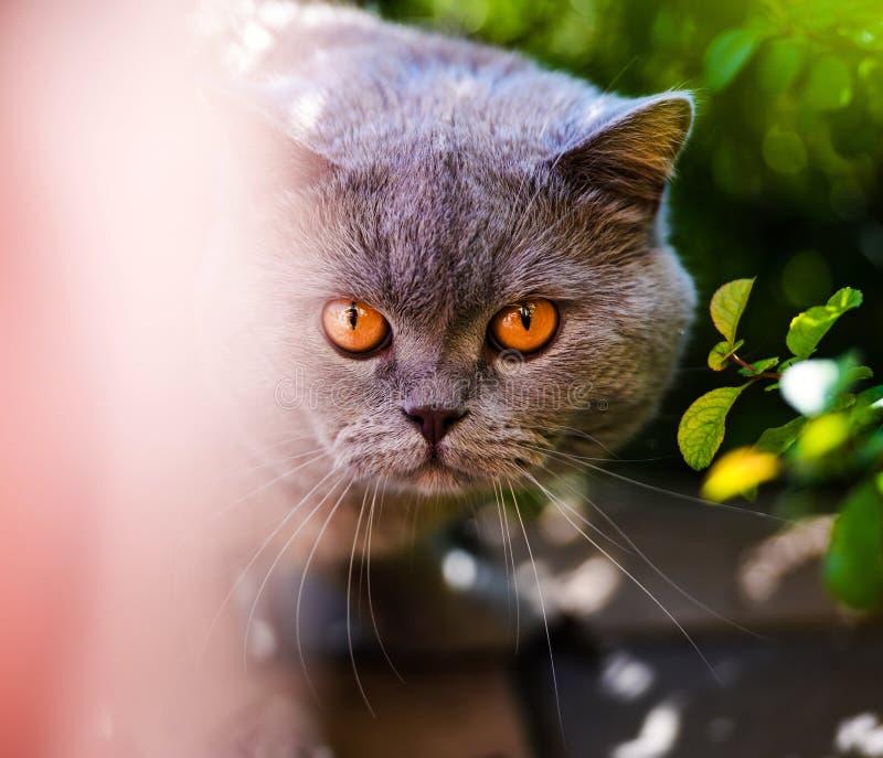 Γλυκιά γάτα μεταξύ των φύλλων στοκ φωτογραφίες