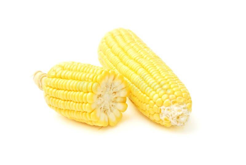 γλυκό λευκό καλαμποκιού ανασκόπησης στοκ φωτογραφία