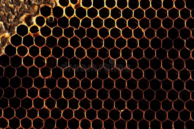 Γλυκό νέκταρ κυψελωτής σύστασης που εξάγεται όχι ακόμα από την κηρήθρα Υπόβαθρο των κηρηθρών στα σκοτεινά χρυσά χρώματα o στοκ φωτογραφίες