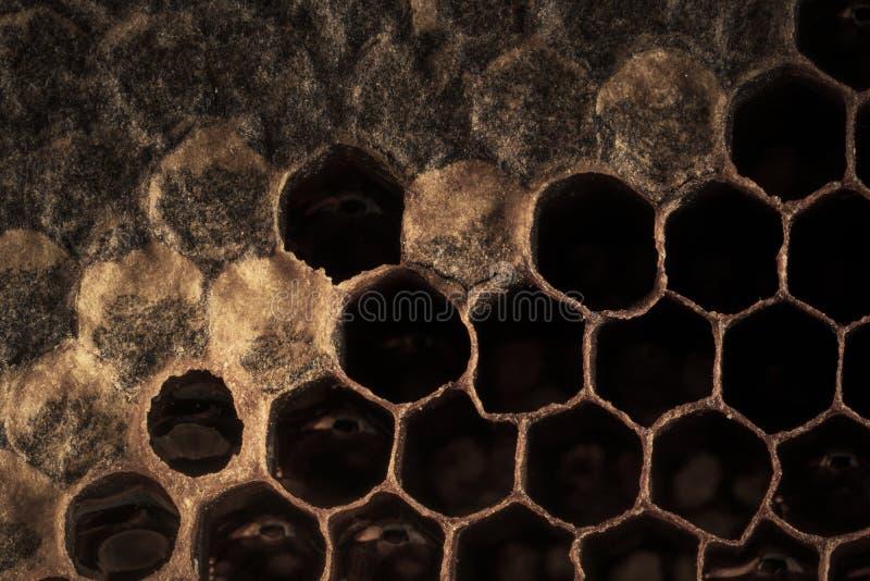 Γλυκό νέκταρ κυψελωτής σύστασης που εξάγεται όχι ακόμα από την κηρήθρα Υπόβαθρο των κηρηθρών στα σκοτεινά χρυσά χρώματα o στοκ εικόνες με δικαίωμα ελεύθερης χρήσης