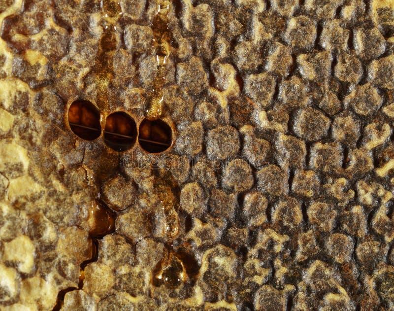 Γλυκό νέκταρ κυψελωτής σύστασης που εξάγεται όχι ακόμα από την κηρήθρα Υπόβαθρο των κηρηθρών στα σκοτεινά χρυσά χρώματα o στοκ φωτογραφία με δικαίωμα ελεύθερης χρήσης