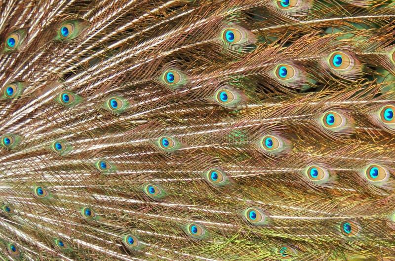 Γοητευτικά φτερά στοκ φωτογραφίες με δικαίωμα ελεύθερης χρήσης