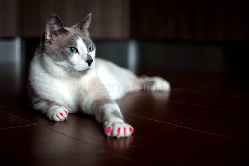Γοητευτική γάτα στοκ εικόνα με δικαίωμα ελεύθερης χρήσης