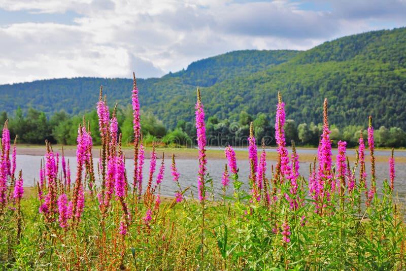 γοητευτική λίμνη λουλο στοκ εικόνα με δικαίωμα ελεύθερης χρήσης