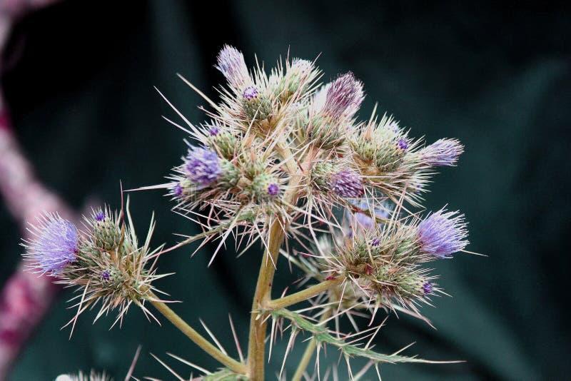 Γοητευτικοί ζωηρόχρωμοι λουλούδι και οφθαλμός στοκ εικόνα